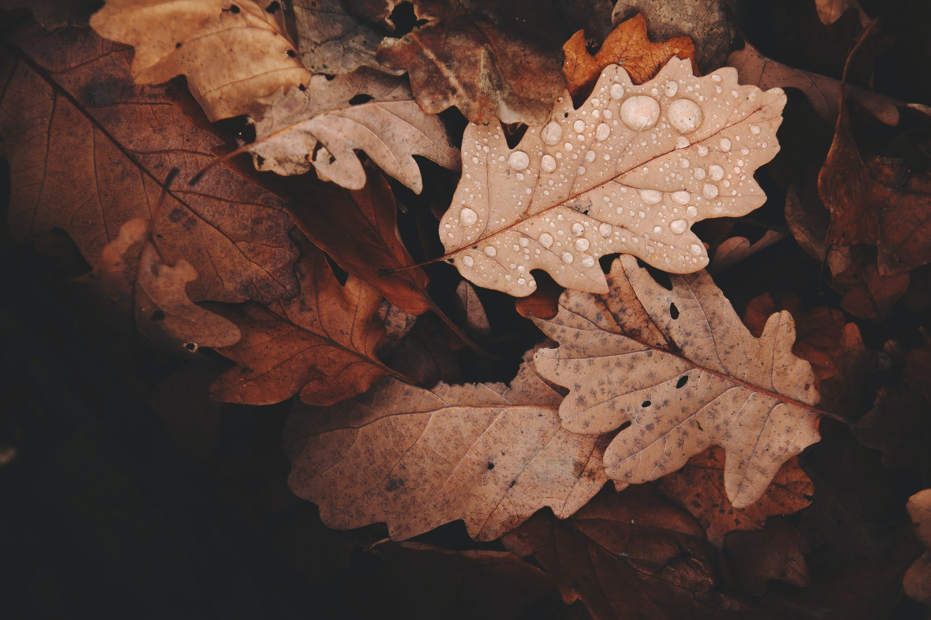 withered leaves photo Regenspiele